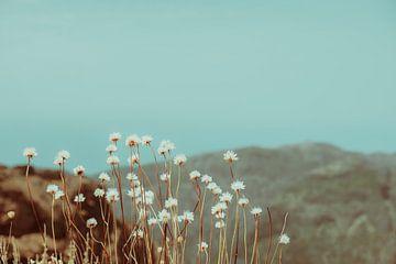 Bergblumen von Pascal Deckarm