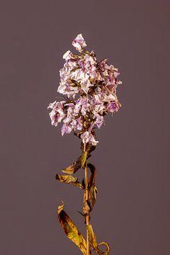 Purpura Flore (rot) von michel meppelink
