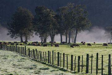 Koeien in de ochtendmist  van Karlijn van der Burg