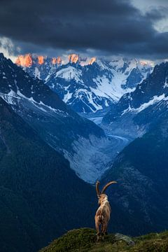 Sein Königreich – Chamonix, Frankreich von Sven Broeckx