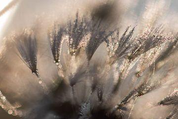 glänzende Fussel von Tania Perneel