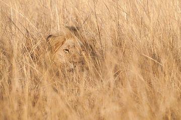 Löwe im Deckel. von Rob Wareman Fotografie