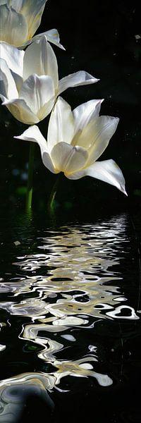 tulpen water van Christine Nöhmeier