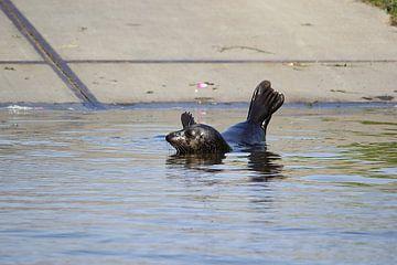 Moeder zeehond alleen van Leon Verra