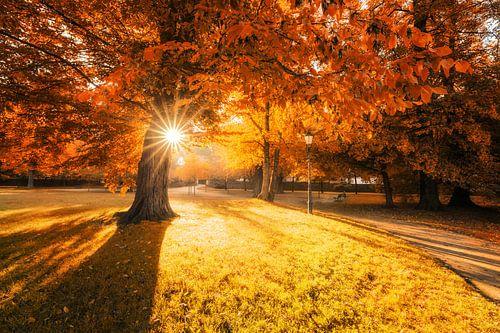 Ein schöner Herbsttag im Park van