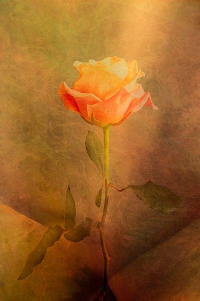 The Rose von Holger Debek