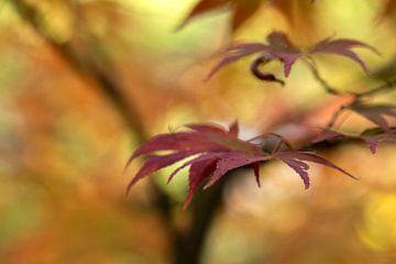 Maple leaf van