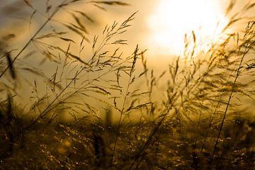 Zonsondergang over een Tarweveld van Vincent van den Hurk