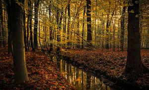 Liefde voor de herfst