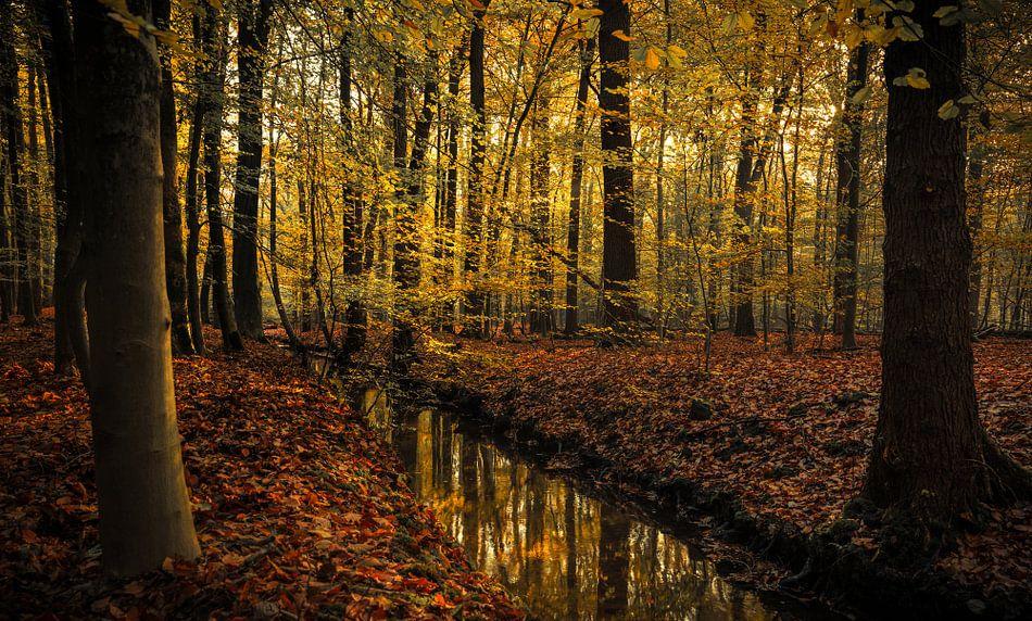 Liefde voor de herfst van Joris Pannemans - Loris Photography