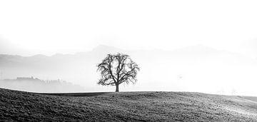 Zwart-wit landschap in de Alpen van Jesse Barendregt