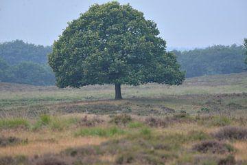 boom op de hei van Petra De Jonge