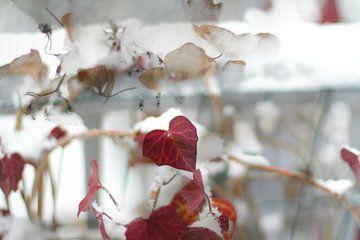 Wintertuin Valentijn dag van Marianna Pobedimova