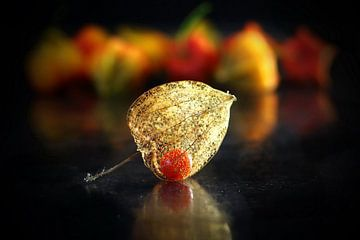 Lampionpflanze von Henk Langerak