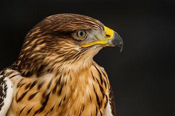 Bird of prey von Rob Smit