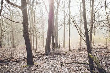 Wald am nebligen Morgen von Lavieren Photography