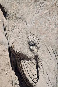 Afrikaanse olifant van Myrthe Visser-Wind