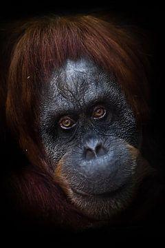 vriendelijke uitstraling. Slim intellectueel gezicht van een orang-oetan met een ironische blik en e van Michael Semenov
