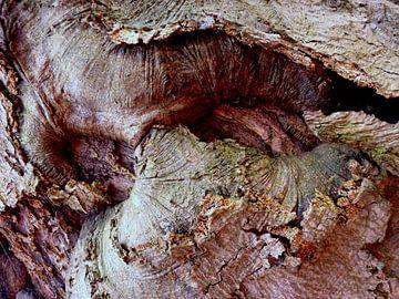 Geheimnisvolle Welt der Bäume (3) van Heidrun Carola Herrmann