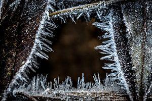 Bevroren kunst