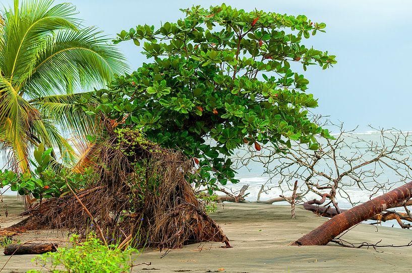 Costa Rica: Cahuita National Park van Maarten Verhees