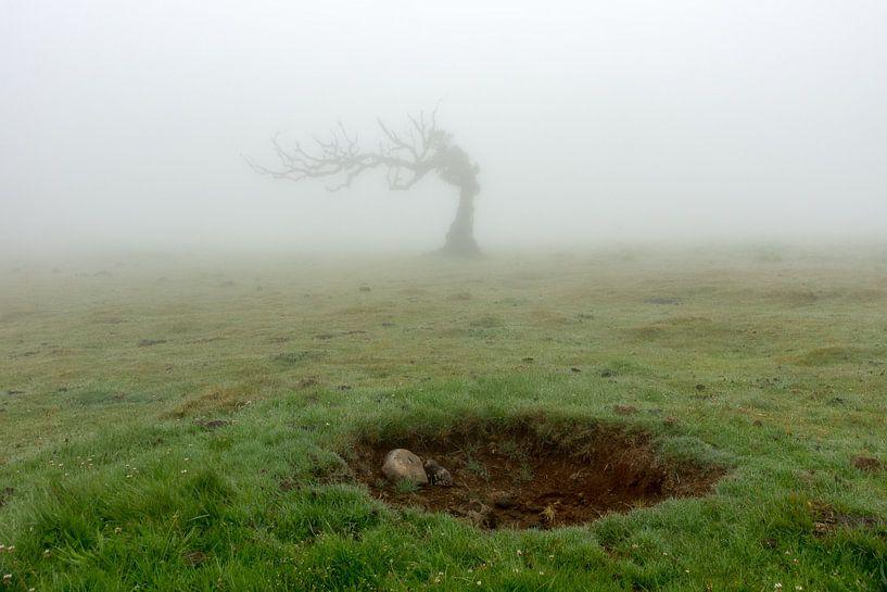 Boom en krater van Michel van Kooten