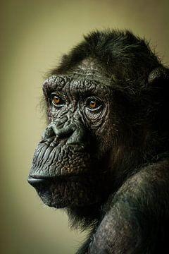 Chimp in gedachten... van Hermen van Laar