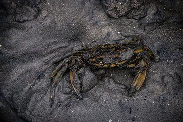 Krab in het zand op het strand, Zeeland van Manuel Declerck