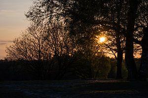 Door de bomen de zon nog zien