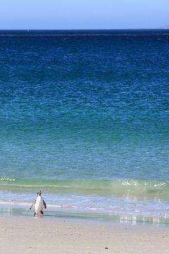 Eenzame pinguïn sur Antwan Janssen