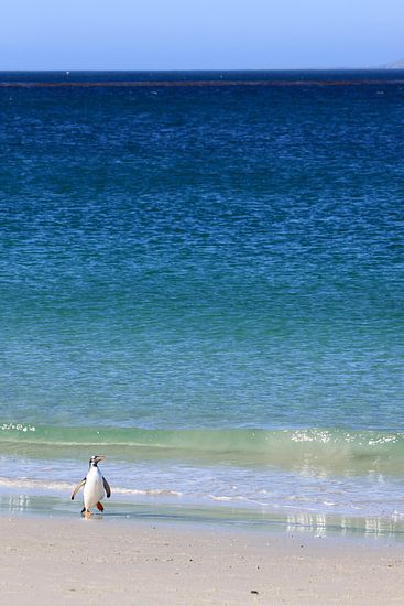 Eenzame pinguïn van Antwan Janssen