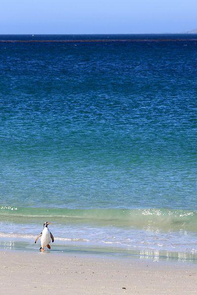 Eenzame pinguïn
