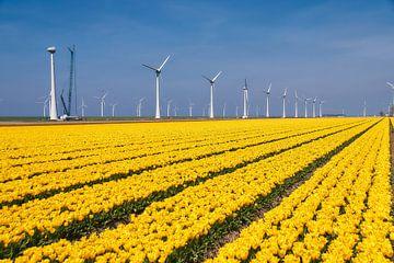 Tulpen veld, geel van Ad Jekel