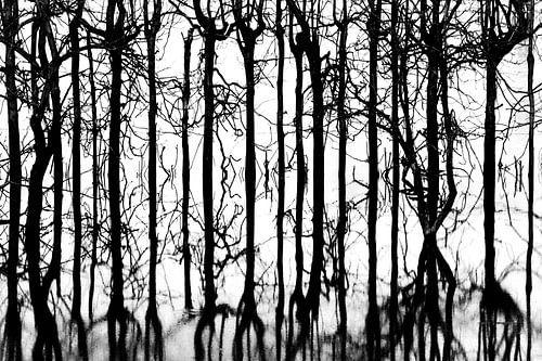 Weerspiegeling van bomen in zwart-wit