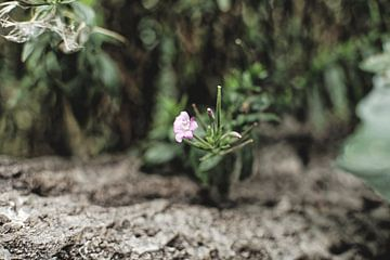 Flowers van Dawid Baniowski