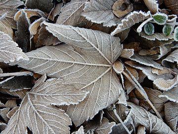 Rijp op bladeren van Joke te Grotenhuis