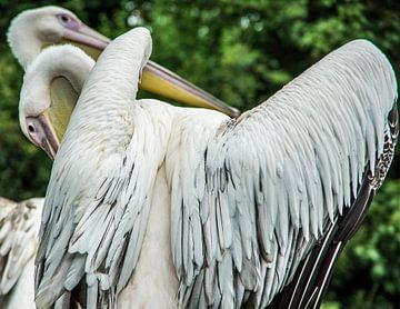 Vogeltanz von Annelies Martinot