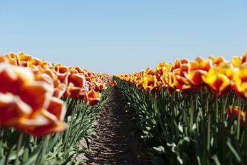 Bloemenveld in het voorjaar van Wim Stolwerk