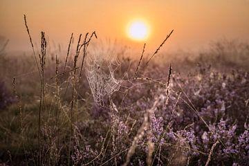 Spinnenweb op Strabrechtse Heide van Rob Boon
