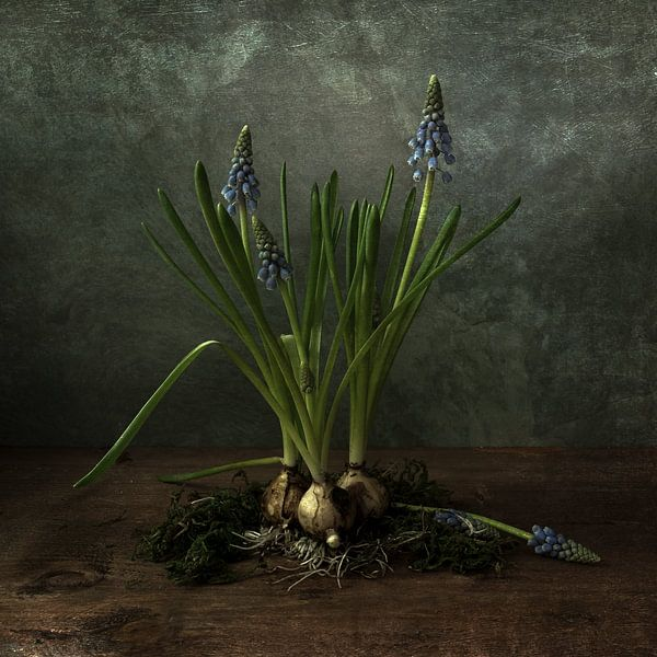 Blauwe druifjes op hout van Elly van Veen