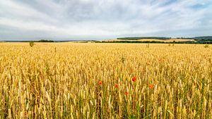 Endlose Getreidefelder von