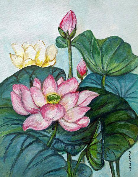 Rosa Lotos . von Ineke de Rijk