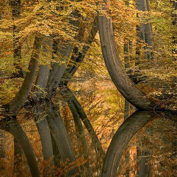 Seltsame krumme Bäume von Toon van den Einde