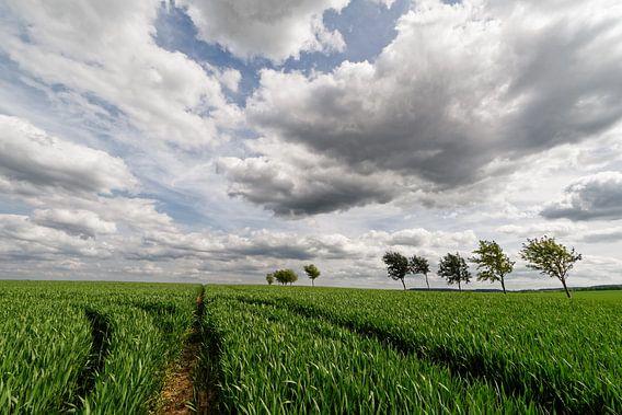 Feld mit Traktorspuren und Baumreihe