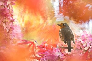 Herfstkleuren met roodborst