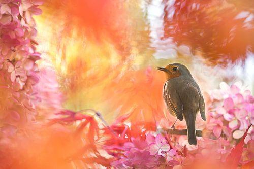 Herfstkleuren met roodborst van
