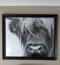 Klantfoto: Portret Schotse Hooglander zwart-wit van Sandra van Kampen, als fotoprint