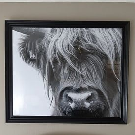 Klantfoto: Portret Schotse Hooglander zwart-wit van Sandra van Kampen, op fotoprint