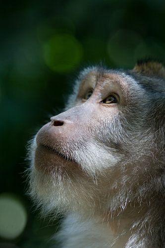Monkey business at Ubud, Bali. von Blijvanreizen.nl Webshop