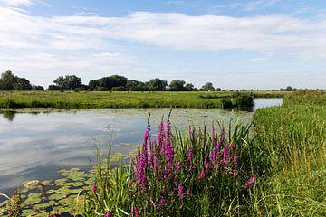 Nederlands landschap van Rijk van de Kaa